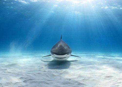美しく神秘的な水辺の画像(10枚目)