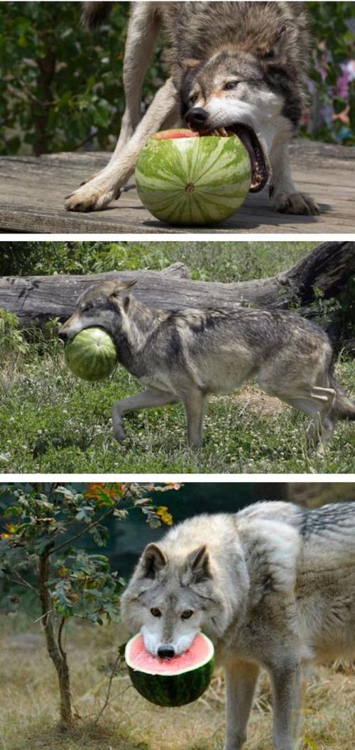 ほのぼのするけどちょっと怖い!幸せそうな動物たちの写真の数々!の画像(21枚目)