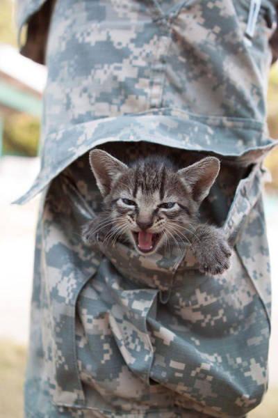戦場にもネコは居る!!極限状態でも癒される戦場のネコの画像の数々!!の画像(28枚目)