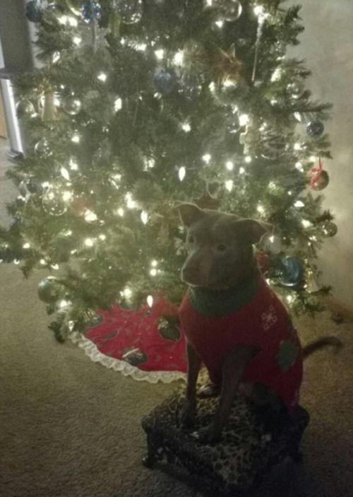 犬とクリスマスの画像(11枚目)