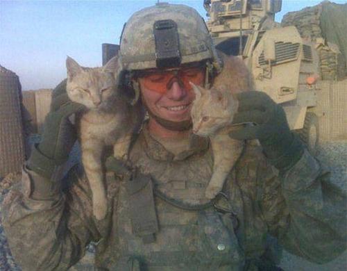 戦場にもネコは居る!!極限状態でも癒される戦場のネコの画像の数々!!の画像(9枚目)