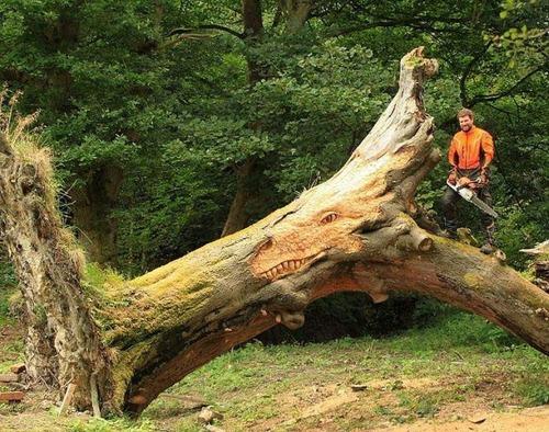 木の魅力を生かした建物やインテリアの画像(1枚目)