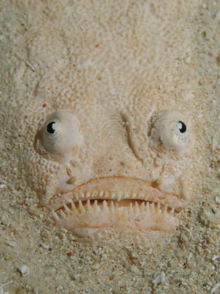 深海の生物の画像(10枚目)