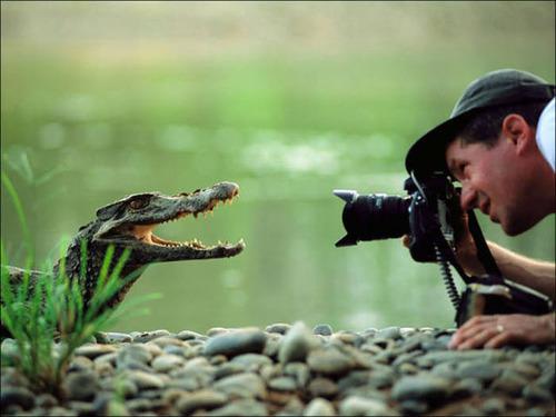 【画像】自然を撮影するカメラマンに興味津々の動物達!!の画像(9枚目)