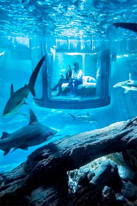 【画像】360度、水に囲まれたお部屋に泊まれるホテルが凄い!!!の画像(8枚目)