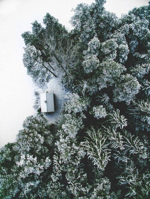 森の中の隠れ家の画像(12枚目)