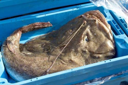 深海の生物の画像(3枚目)