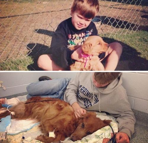 犬の成長の画像(12枚目)