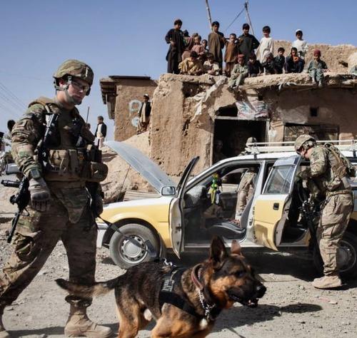 戦地での軍用犬の日常がわかるちょっと癒される画像の数々!!の画像(29枚目)