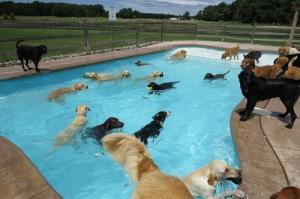 プールが好き!水泳が大好きな犬で大混雑している動画の画像(1枚目)