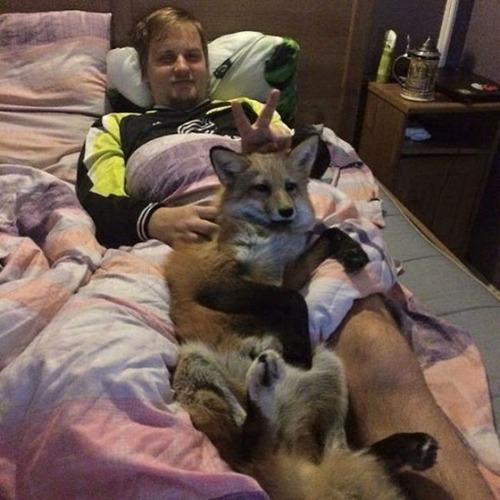犬と猫と仲良しのキツネの画像(4枚目)