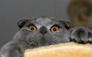 動物達が驚いている瞬間の表情をとらえた写真が凄い!の画像(44枚目)