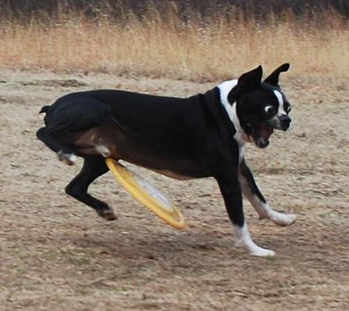 犬はバカ可愛い!!バカだけど憎めない可愛い犬の画像の数々!!の画像(33枚目)