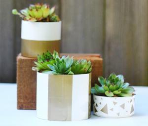 【画像】狭くても大丈夫!小さな植木が綺麗に飾れる工夫の数々!の画像(3枚目)