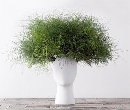 【画像】人の頭から花や植木が生えてくる植木鉢wwwの画像(3枚目)