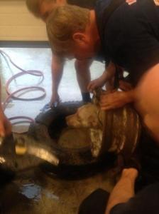 【画像】タイヤのホイールに頭がはまった犬の救助方法がなかなか凄い!!の画像(11枚目)