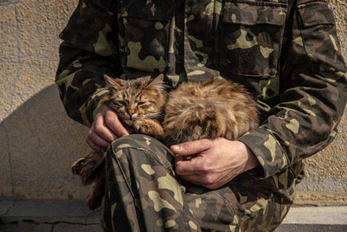戦場にもネコは居る!!極限状態でも癒される戦場のネコの画像の数々!!の画像(22枚目)
