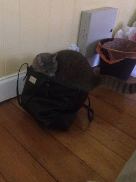 にゃんとも言えない、ちょっと困った猫の画像の数々!!の画像(29枚目)