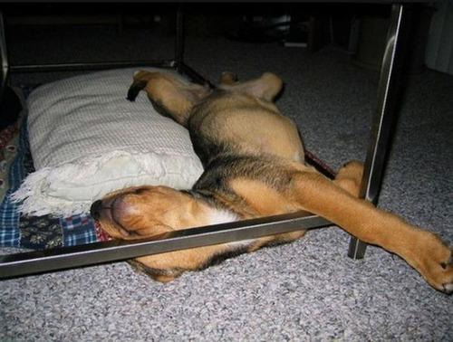 子犬が眠っているの画像(13枚目)