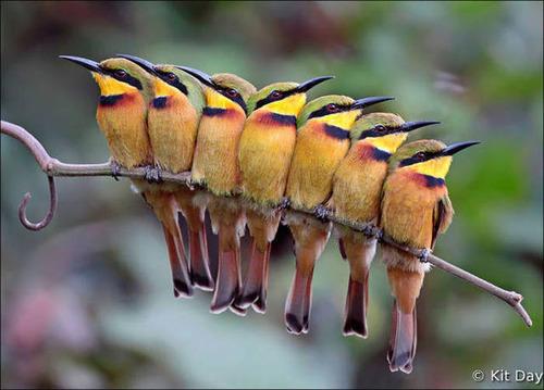 超過密!密集状態の鳥の画像がもふもふで癒されるwwの画像(15枚目)