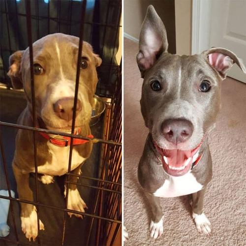 捨て犬が保護された前後の画像(4枚目)