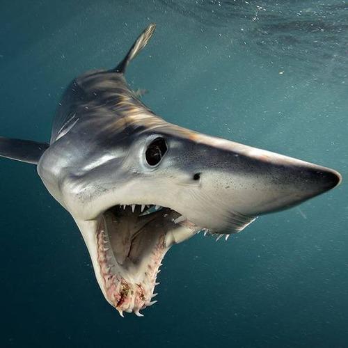 深海の生物の画像(24枚目)