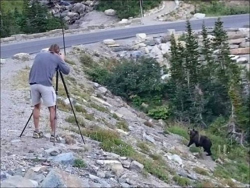 【画像】自然を撮影するカメラマンに興味津々の動物達!!の画像(11枚目)