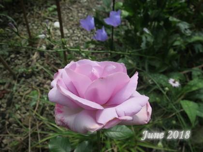 IMG_8329_180613.jpg