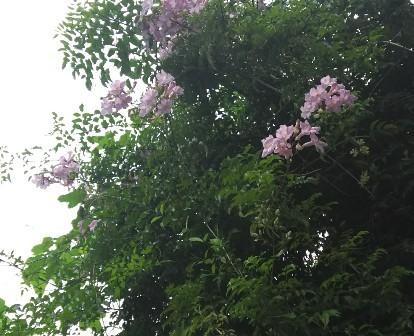 雨中の花1