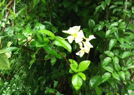 雨中の花3