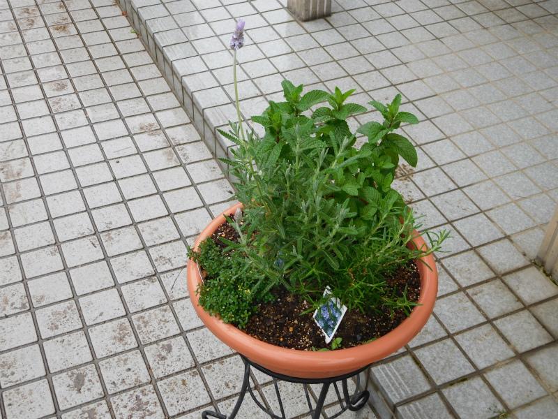 ss-ラベンダーの花