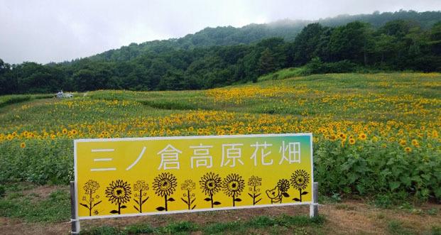 ひまわり畑2018-2