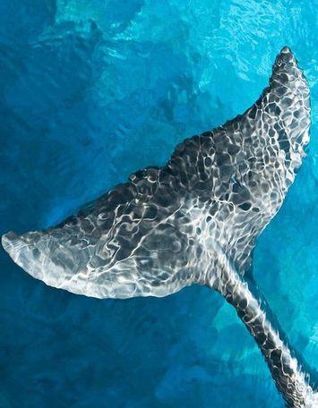 占いクジラ