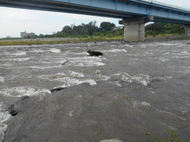20180906中央大橋上流の荒瀬DSCN4999.jpg