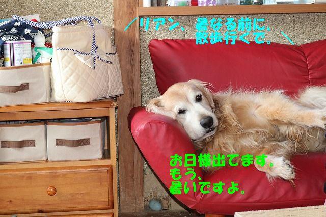 IMG_2672_201807160018266e6.jpg