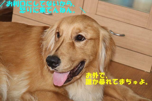 IMG_3187.jpg