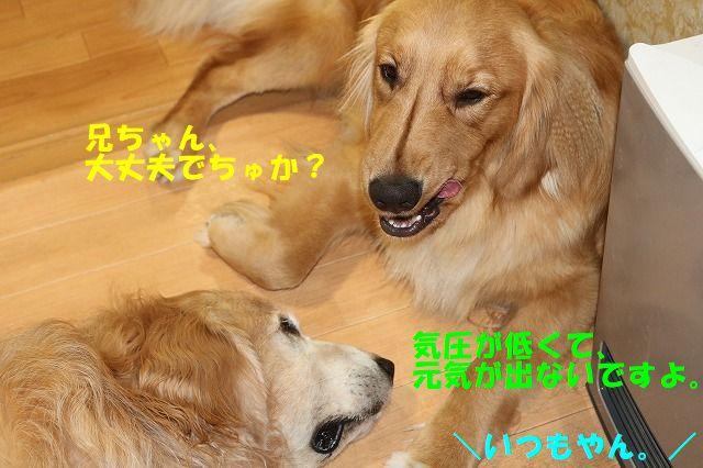 IMG_3504.jpg