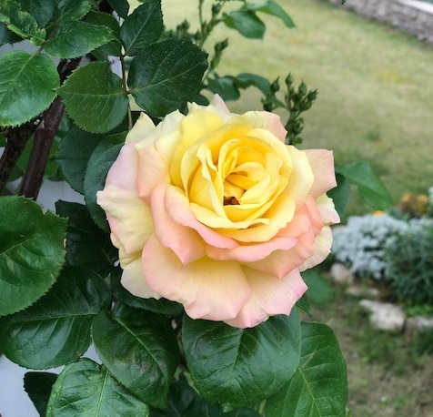 securedownload_2018042519021295f.jpg