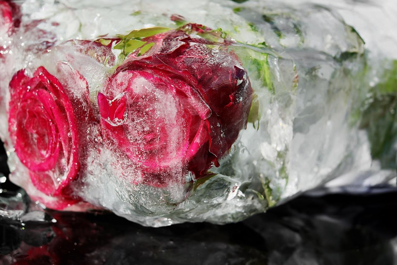 red-roses-3216506_1280.jpg