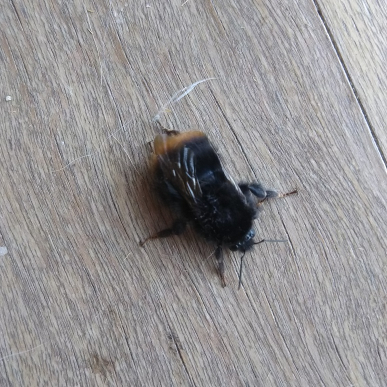Bee 20180420