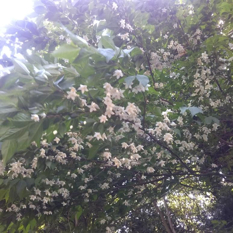Blossom 20180429