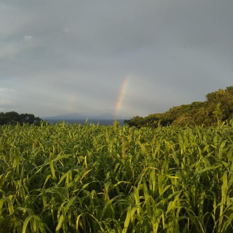 Rainbow 20180730