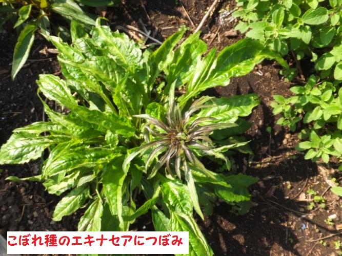 DSCF0042_1.jpg