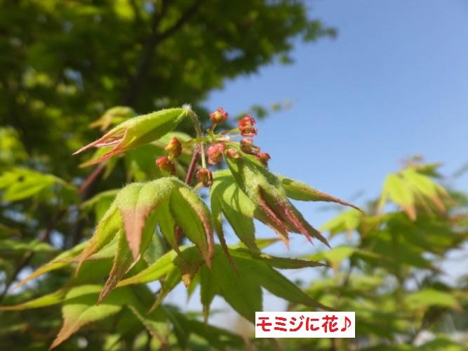 DSCF0054_1.jpg