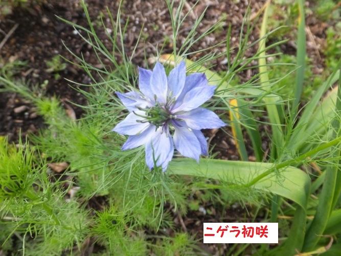 DSCF0340_1.jpg