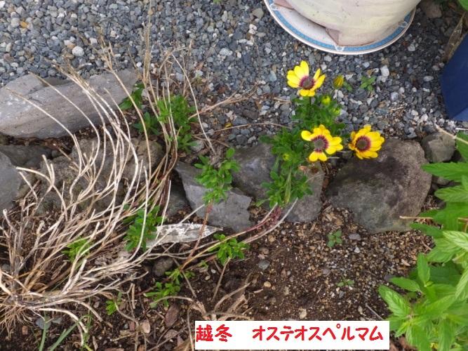 DSCF0369_1.jpg