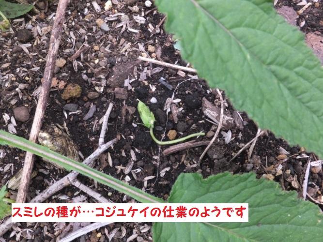 DSCF0758_1.jpg