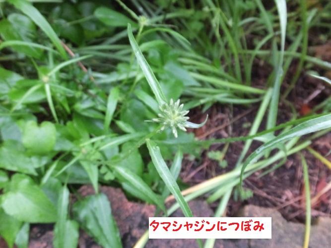 DSCF0930_1.jpg
