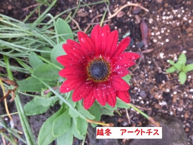 DSCF0931_1_201805030936042a3.jpg