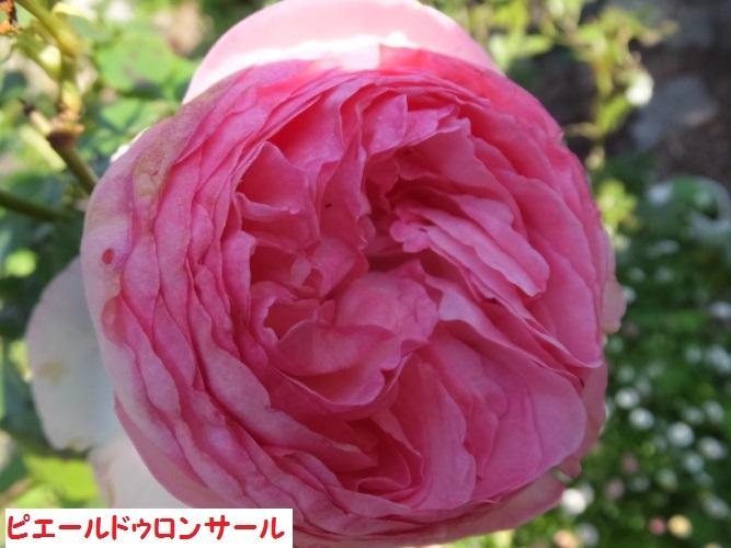 DSCF1016_1.jpg